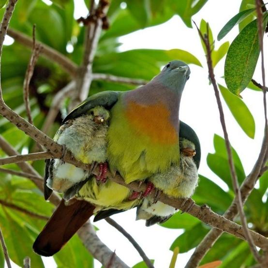Anne Baba Sevgisi ve Aile İçi Sevgi