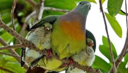 Hz. Peygamber'de Anne Baba Sevgisi ve Aile İçi Sevginin Toplumsal Barışa Etkileri