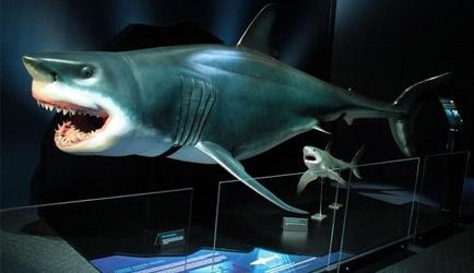 Dev köpekbalıkları İstanbul'da!