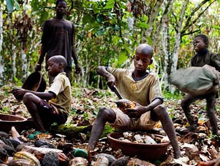Çikolatanın Tadını Bilmeyen Kakao İşçileri