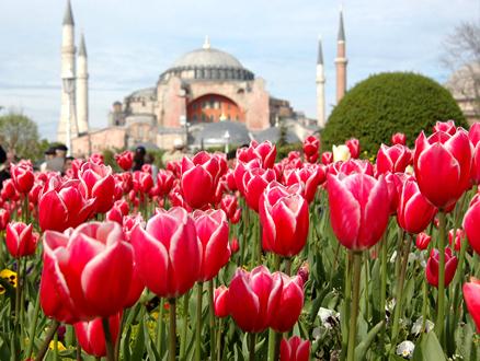 İstanbul'da Lale Festivali Başlıyor
