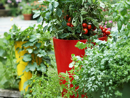 Kendi Sebze Bahçenizi Oluşturun