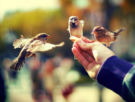 Sosyal Kaygılardan Kurtulmak İçin Bir Miktar Nezaket