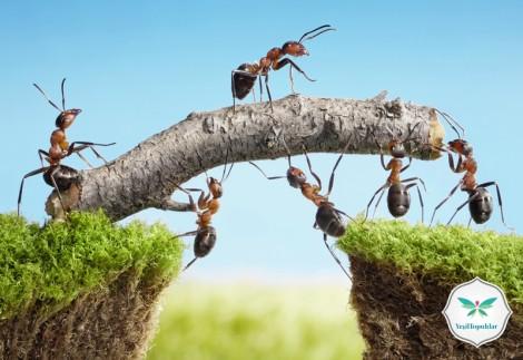 Toprağın Efendisi Karıncalar ve Helal Rızık