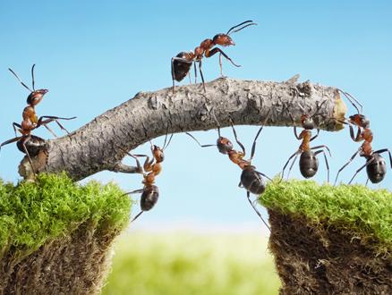 Toprağın Soylu Hükümdarları Karıncalar