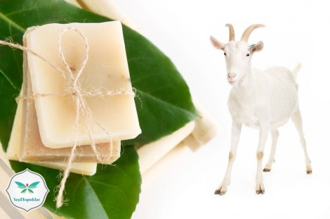 Keçi Sütü Sabununun Faydaları Nelerdir