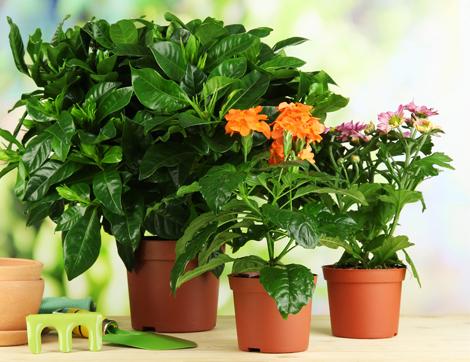 Evinizin Havasını Temizleyen Bitkiler