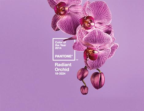 """Pantone 2014 Yılının Rengini Açıkladı """"Parlak Orkide Moru"""""""