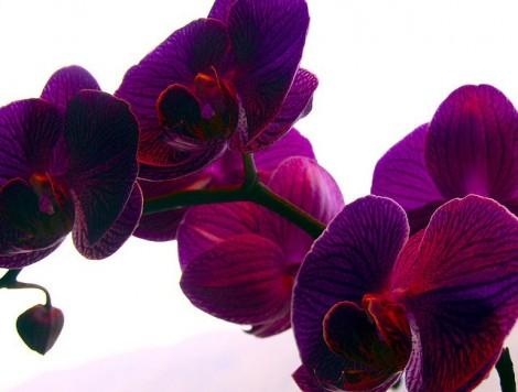 2014'ün Öne Çıkan Rengi Orkide Moru