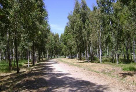 Sasalı Piknik Alanı