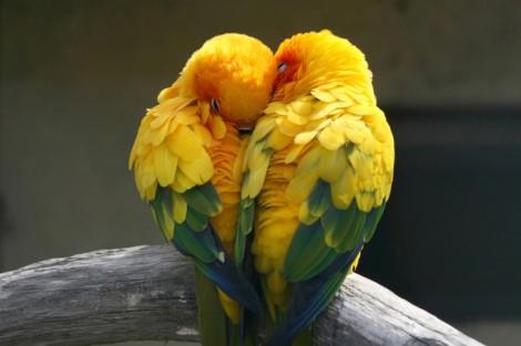 Sevgiyi Elde Etmenin Yolları