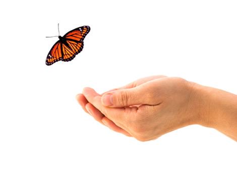 Kelebek Ömürlü Hayatlarımız