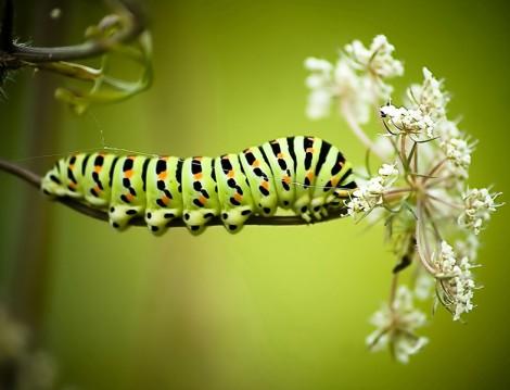 Tırtılın Kelebeğe Dönüşü