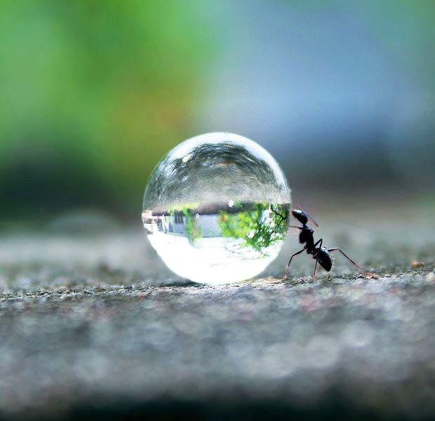 Karıncayı Bile İncitmem Deme