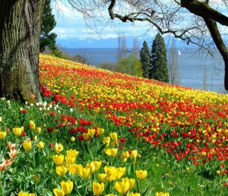 Bir Devre İsmini Veren Çiçek Lale