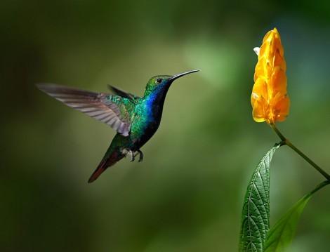 Uçmak Kuşlara Münhasır Olsun