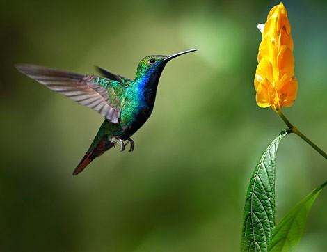 Bırakın Uçmak Kuşlara Münhasır Olsun…