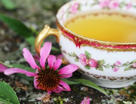 Metabolizmayı Kışa Hazırlayacak Bitki Çayları ( Ekinezya)