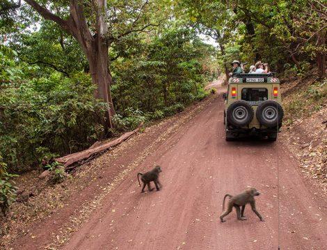 """Büyük Göç""""e, National Geographic Kaşifleri Eşliğinde Tanık Olma Fırsatı"""