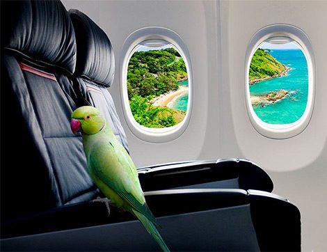 Uçmanın Nesi Bu Kadar Korkutucu?