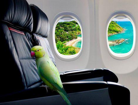 Uçak Fobisini Ortadan Kaldırmak İçin Neler Yapılabilir