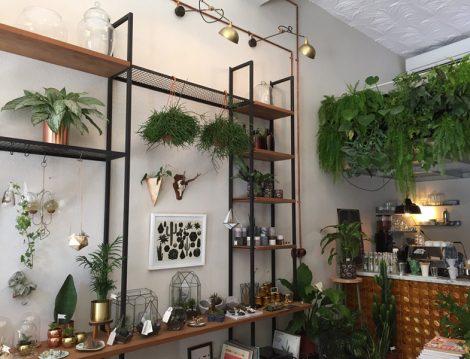 Müz Botanik & Kahve