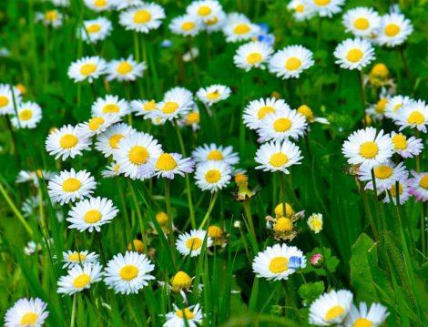 İlkbahar Gezi Önerileri