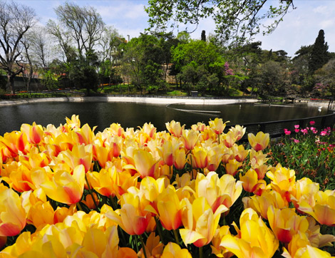 Nisan Ayında Mutlaka Görmeniz Gereken İstanbul'un Lale Bahçeleri