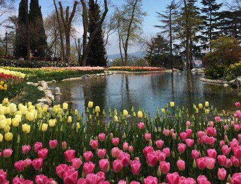 Emirgan Korusu Lale Bahçeleri ve Gölet