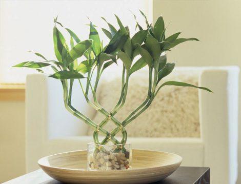Bambu Çiçeği Budama