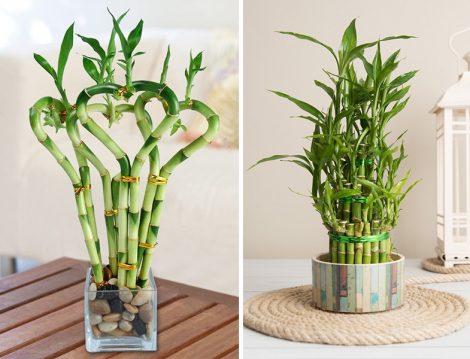 Bambu Çiçeği Sulama