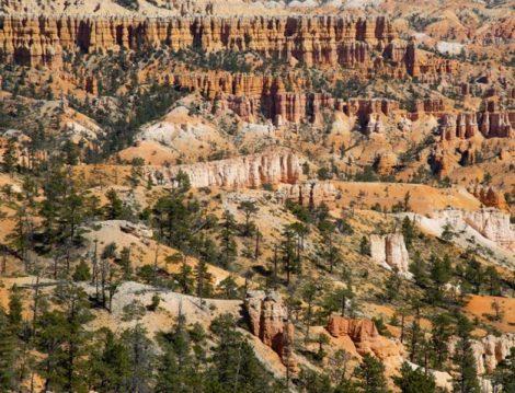 Amerika Ulusal Parklar Canlı İzleme