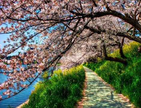 Harika Bahar Kareleri Yakalayabileceğiniz İstanbul'un En Güzel Parkları